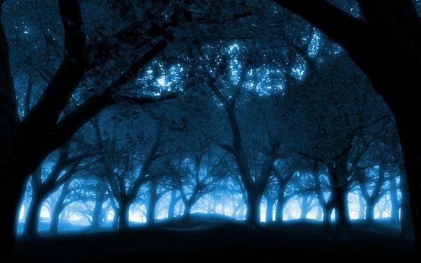 BlueForest3